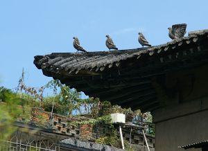 白鸽楼的特色脊兽:白鸽(拍摄:nenva / 2008年8月)