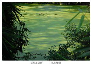 陈绍宽故居后花园池塘(拍摄:池志海/2011.10)