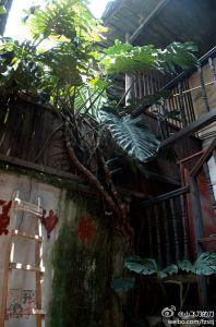 庭院及楼梯(拍摄:小飞刀的刀)