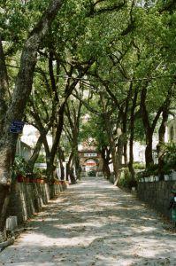 学校林荫道(拍摄:池志海/2012)