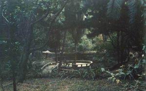 水池和南洋杉 火燄山 1994